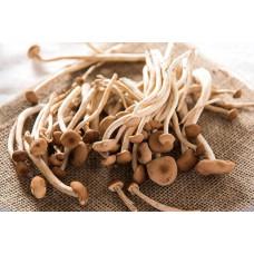 Tea Tree Mushrooms 茶树菇